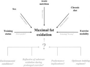 Fat Oxidation diagram showing how fat is burned when using Lipotropic Injections for Weight Loss