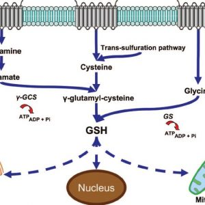 Glutathione injections available at HCG Near Me.
